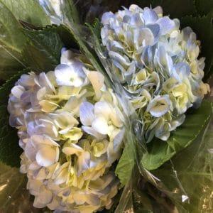 Blue Hydrangea $4.95 per stem