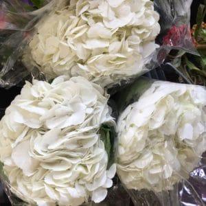 White Hydrangea $4.95