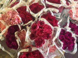 Nobbio Carnations