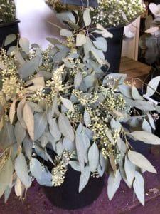 Eucalyptus $19.95 per bunch