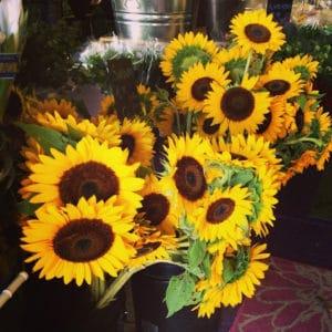 Local Sunflowers $8.95 per bunch