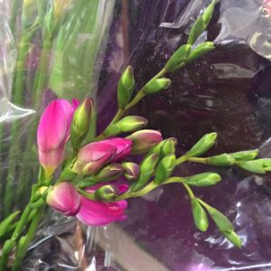 Freesia $1.50 per stem