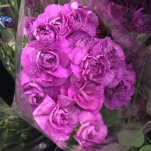 Mini Carnations $12.95 per bunch