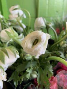 Local Ranunculus $2.00 per stem