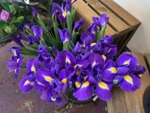 Iris $1.70 per stem