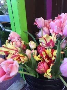 Local Tulips $2 per stem